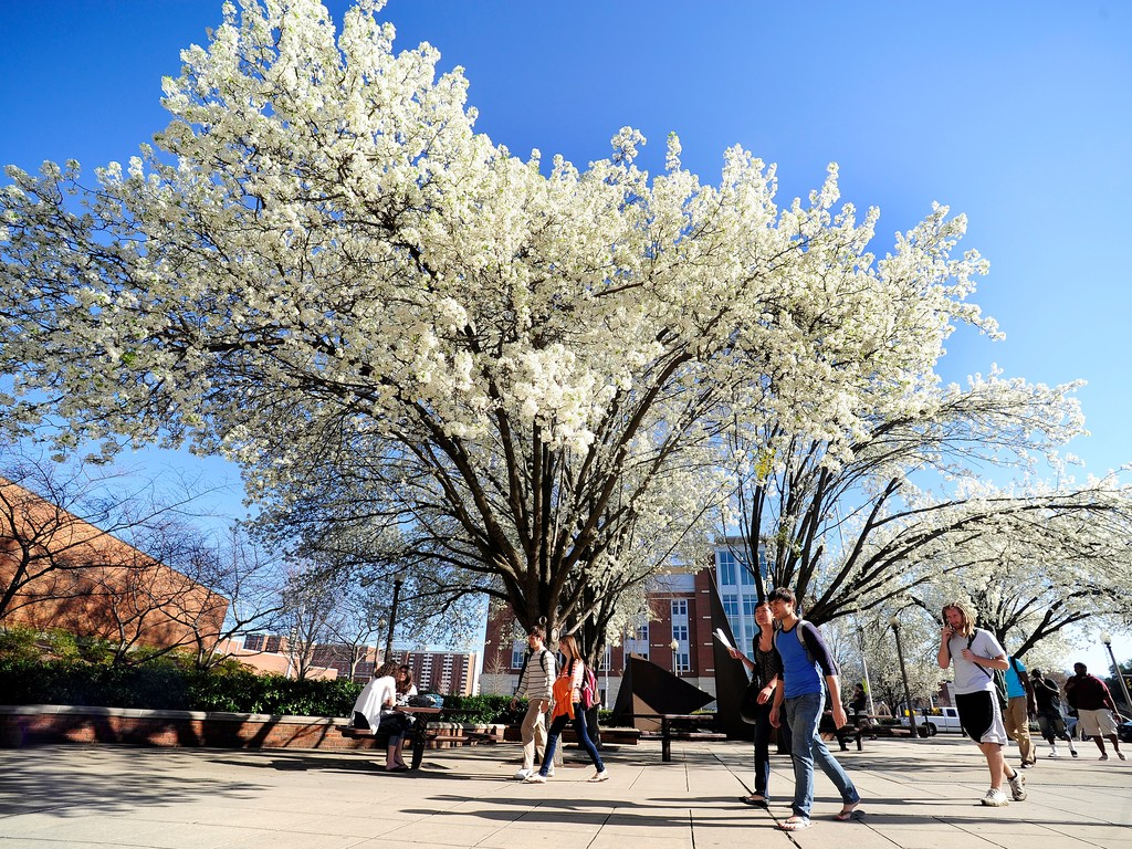 INTO UAB students walking around the campus during spring time with blossoming trees_28408.jpg